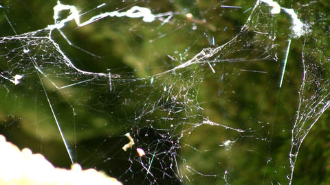 Sunlight shines from spiderweb swaying in the wind (High... Stock Video Footage