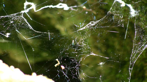 Sunlight shines from spiderweb swaying in the wind (High Definition) Footage