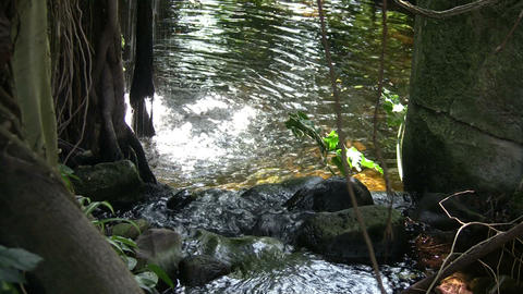 Small waterfall is splashing into a sun-lit pond Stock Video Footage