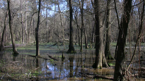 Shot of a quiet swamp on a sunny day Stock Video Footage