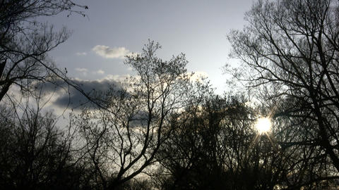 Trees silhouette the sky amidst the sun (High Definition) Stock Video Footage