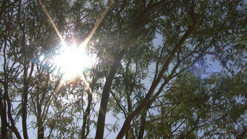 Tree gently sway in wind aginst shining sun (High Definition) Footage