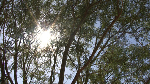 Tree gently sway in wind aginst shining sun (High... Stock Video Footage