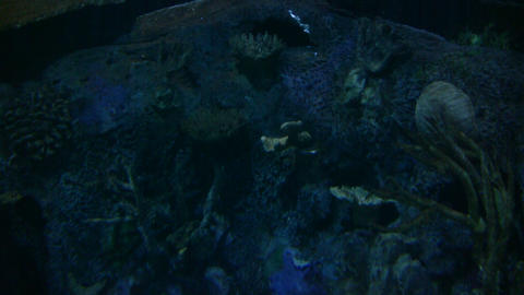 Water ripples reflect off rocks in underwater scene (High... Stock Video Footage