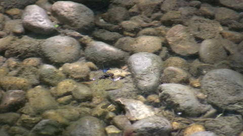 Water strider casually skims the pond's surface (High... Stock Video Footage