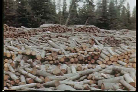 Interesting footage of logs being floated down a r Footage