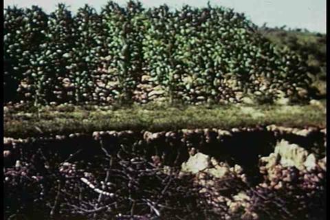 Soil management techniques of the 1940s Footage