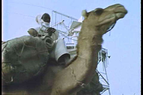 Camels pass a high tech tower in a third world cou Live Action
