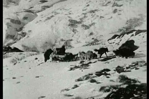 Dog sledding in Alaska wilderness. A silent film b Footage