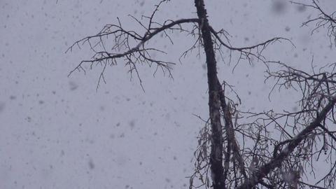 Falling Snow HD Footage