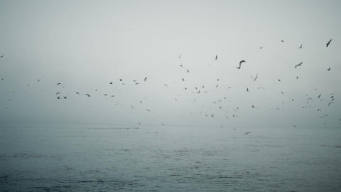 Birds on foggy sea Footage
