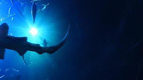 Underwater ocean world #4 Footage