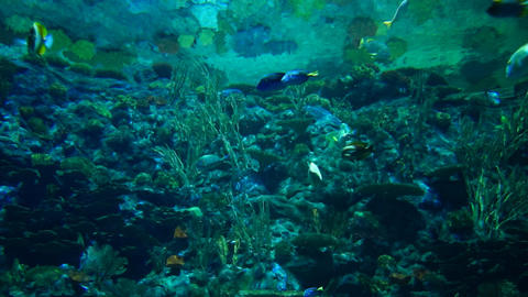Underwater ocean world Footage
