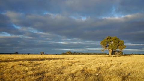 Australian landscape #3 Footage