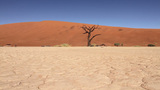 Tracking Shot In The Nambian Desert stock footage