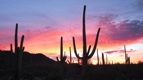 Saguaro Sunrise Footage