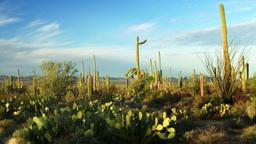 Saguaro National Park Footage