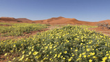 Tracking Shot Of Flowers In Desert stock footage
