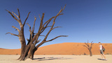 Girl Walks To A Dead Tree In Deadvlei stock footage