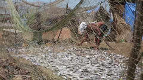 Two local people drying fish Footage