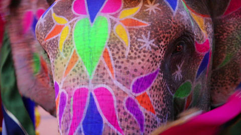 Close-up view of painted elephant Footage