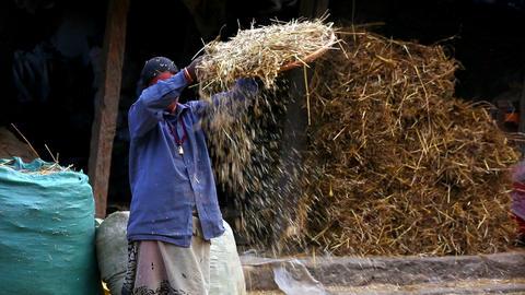 Local woman sieving, bhaktapur, kathmandu, nepal Footage