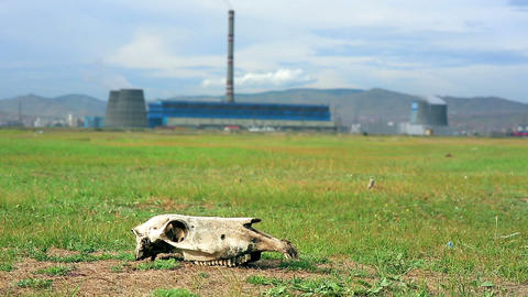 Skull lying on grass next to power plant Stock Video Footage