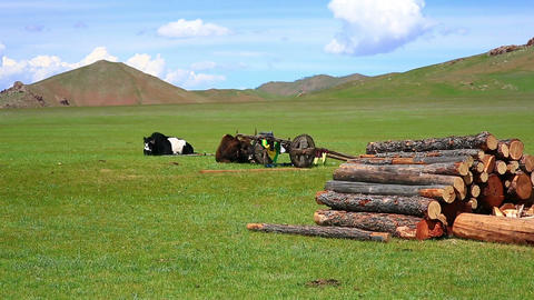 Animals grazing on grassland, mongolia Footage