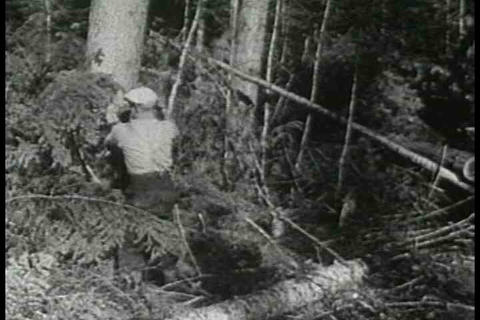 The logging industry in Quebec Canada in 1937 Footage