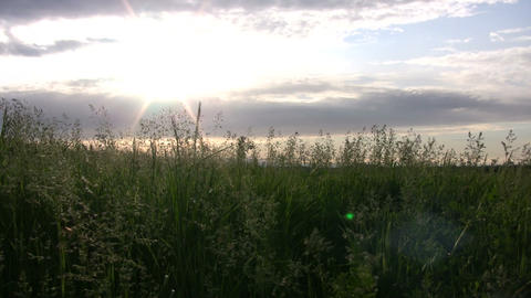 Field of grass sways amidst the setting sun (High... Stock Video Footage