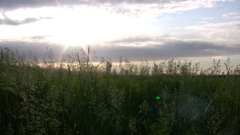 Field of grass sways amidst the setting sun (High Definition) Footage