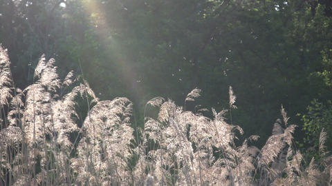 Field of grass sways amidst the sunlight (High Definition) Stock Video Footage
