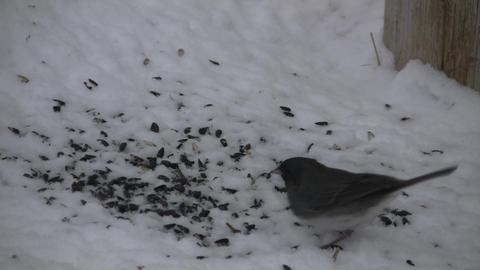 Bird Stock Video Footage
