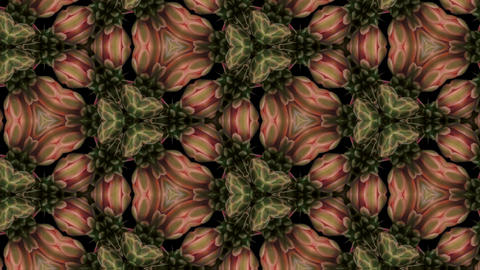 Organic kaleidoscope from blooming red cactus 16a Stock Video Footage