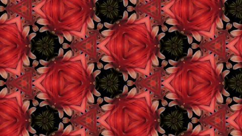 Organic kaleidoscope from blooming red cactus 16a Animation