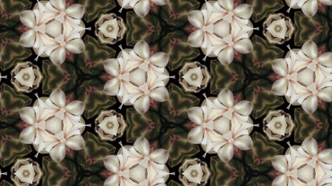 Organic kaleidoscope from blooming white cactus 8b Stock Video Footage