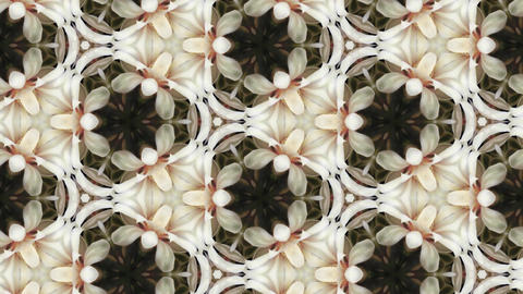 Organic kaleidoscope from blooming white cactus 8b Stock Video Footage