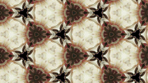 Organic kaleidoscope from blooming white cactus 8b Animation