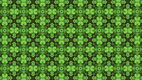 Organic kaleidoscope from growing clover plants 1c Stock Video Footage
