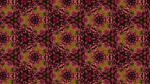 Organic kaleidoscope from blooming red dahlia flower 13a Animation