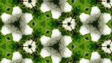 Organic Kaleidoscope From Blooming Plum Blossoms 10a stock footage