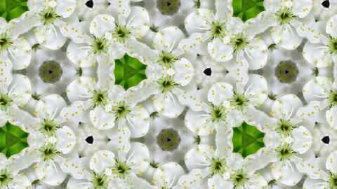 Organic kaleidoscope from blooming plum blossoms 10a Animation