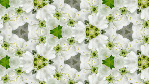 Organic kaleidoscope from blooming plum blossoms 10a Stock Video Footage