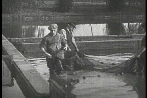 A boy catches some fish in a river during the 1920 Footage