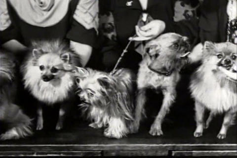 A dog show in 1934 Footage