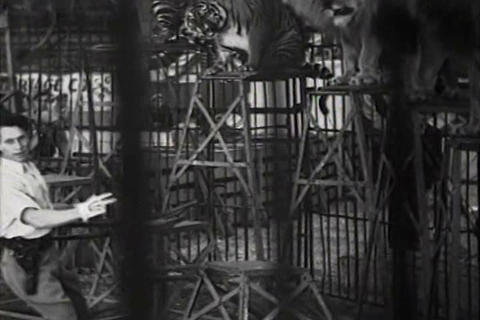 Clyde Beatty and his trained lions in 1934 Live Action