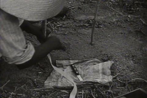 Harvesting rubber in the Amazon in 1941 Live Action