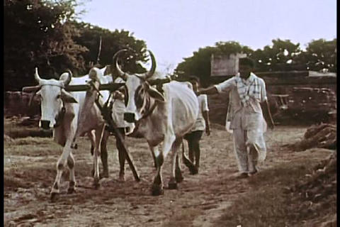 Village life in India in the 1960s Live Action
