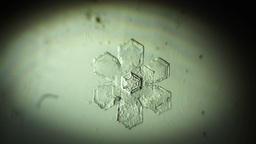 snowflake, appear Raw quality Footage