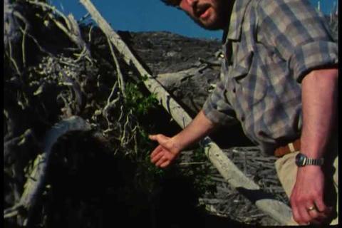 Life returns to Mt. Saint Helens after the 1980 er Footage